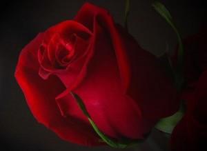 красное романтика
